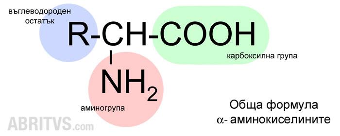 аминокарбоксилни киселини, аминокиселини