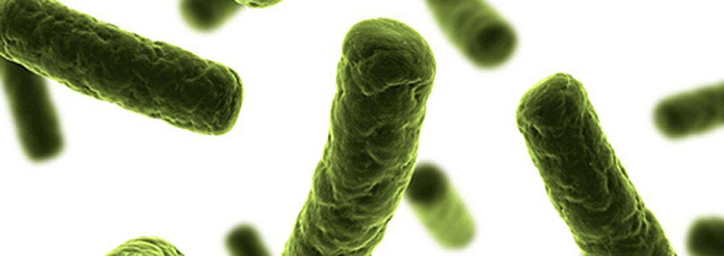 бактерии, бацили