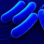 бактерии, бактерия
