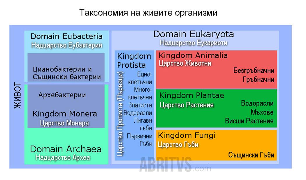 таксони, естествена класификация
