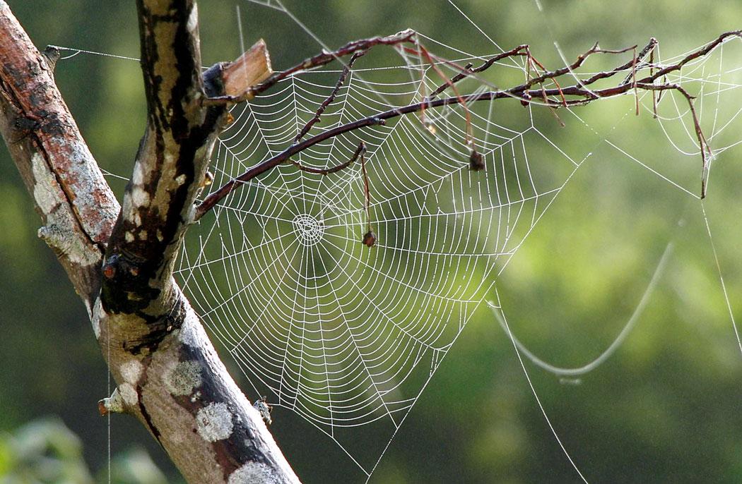 Паяжина на паяк