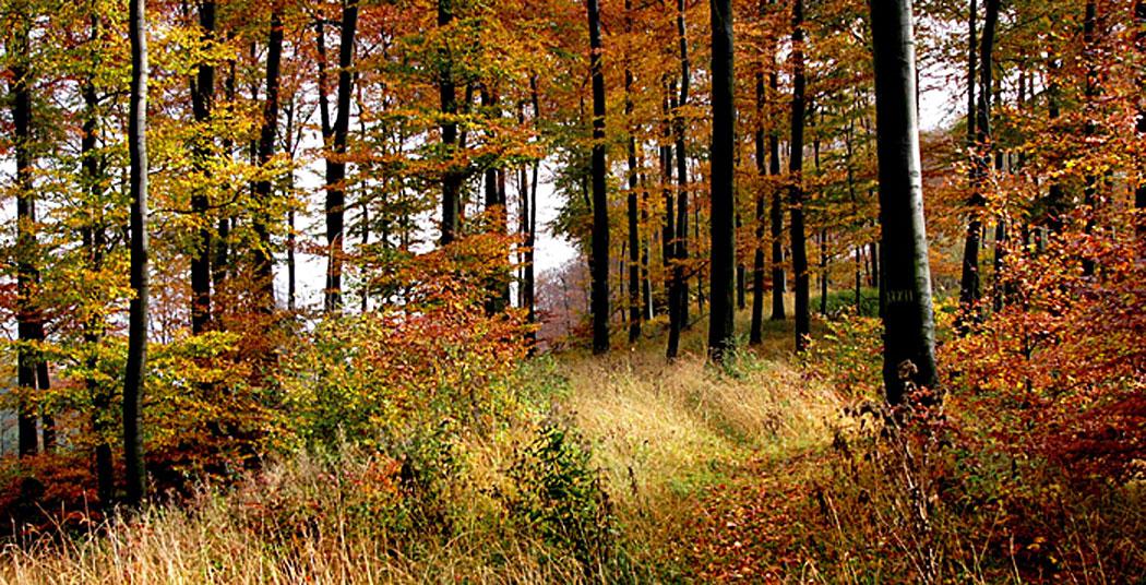 Тевтобургската гора