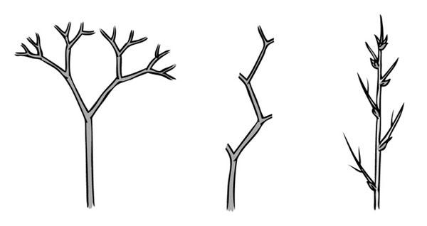 растително стъбло