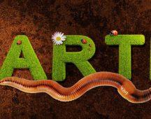 Земен червей (дъждовен червей)- тип Прешленести червеи
