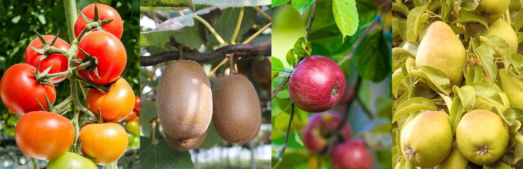 прост плод тип ягода (домат, киви) и лъжливи плодове (ябълка, круша);