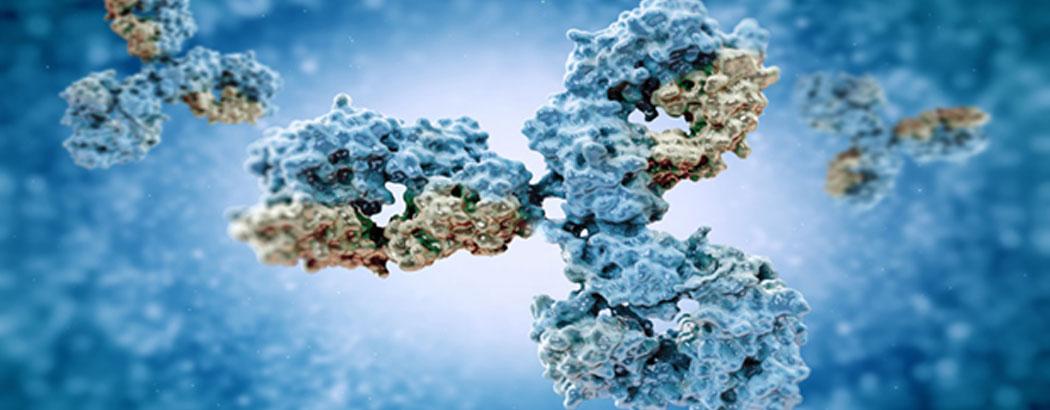 антитела, имунитет, лимфоцити