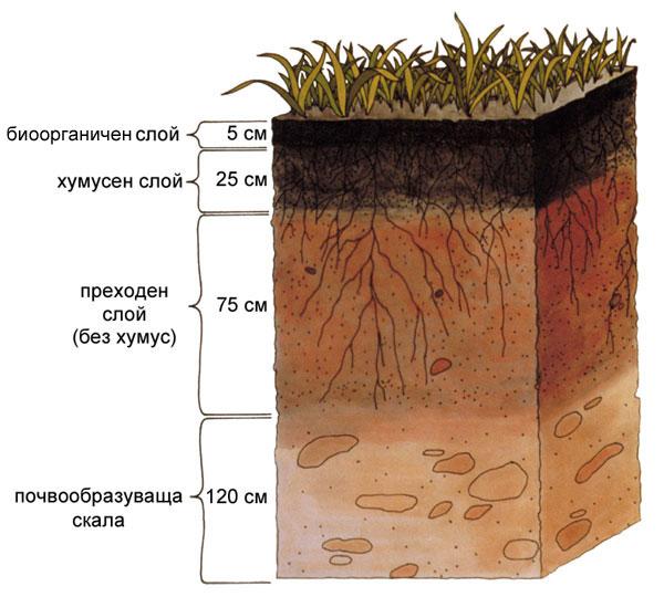 почва - вертикална структура, почвени слоеве