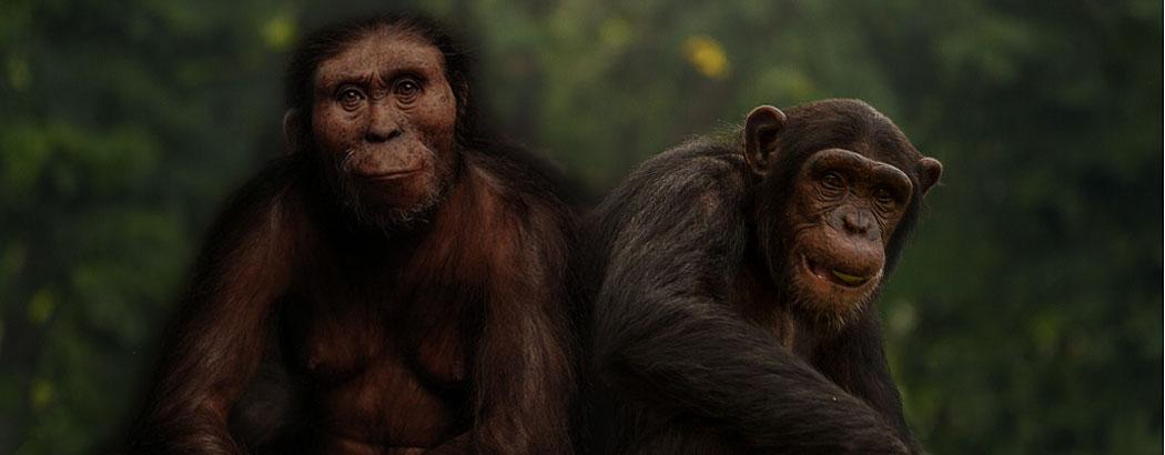 еволюция, естествен отбор, произход на човека
