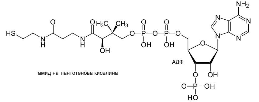 Коензим А, нуклеотид, ацетилкоензим А