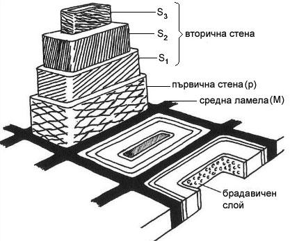 Устройство на клетъчна стена