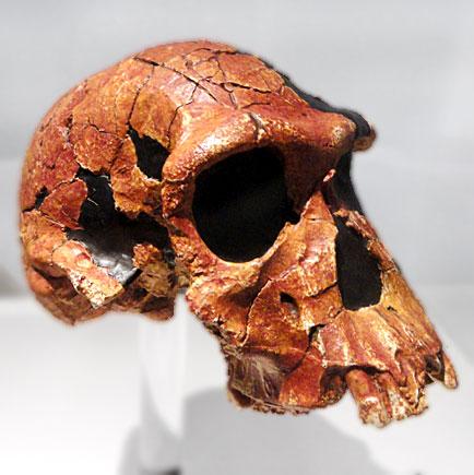 Хомо хабилис (произход на човека)