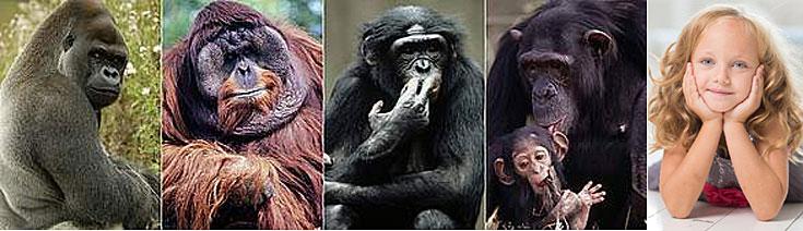 Великите маймуни - произход на човека